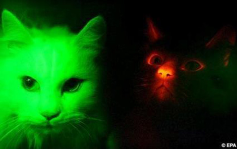 glow-in-the-dark-cats.jpg