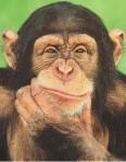 kera simpanse
